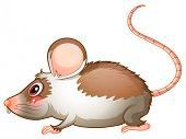 Illustration of the side view of a rat on a white background