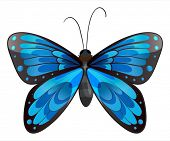 Illustration of a beautiful blue butterfly on a white background