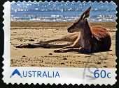 AUSTRALIA - CIRCA 2011: A stamp printed ibn Australia shows Kangaroo on the beach circa 2011
