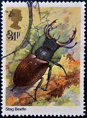 UNITED KINGDOM - CIRCA 2012: A stamp printed in Great Britain shows Lucanus cervus (stag beetle)