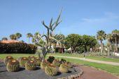 Jardín de cactus en Caleta De Fuste, Fuerteventura