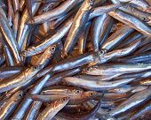 fry catch (anchovy) for sale