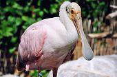 Funny Bird In Valencia Park