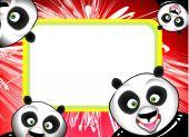 Funny Panda Frame