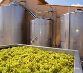 chardonnay winemaking with grapes and Fermentation stainless steel tanks vessels