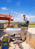 chardonnay wine grapes winemaker in destemmer crushing machine at Mediterranean