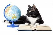 pic of puss  - Black cat with a globe a book isolated on white background - JPG