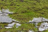 picture of lichenes  - Old stone wall background with moss and lichen - JPG
