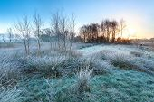 Cold Frosty Sunrise Over Marsh