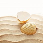 sea shells on the sand