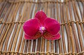 Macro of red  violet orchid on bamboo mat