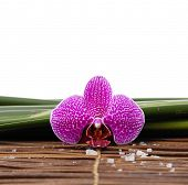 gorgeous orchid with pile of white salt on bamboo mat on leaves background