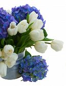 posy  of white tulips and blue hortensia flowers close up