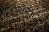 Abstract perspective view to dark wide wet soil ways, trails, dry rows outdoor Natural brown dirty t