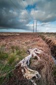 ancient Bog-wood in a rural peat bog field in Ireland
