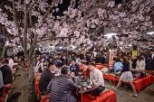 KYOTO, JAPAN - APRIL 3, 2014: People enjoy the spring season by partaking in nighttime Hanami festiv