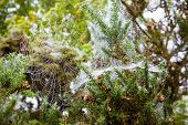 Early Morning Spiderweb