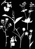 illustration with wild flowers silhouettes isolated on black background