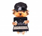 puppy holding case with money