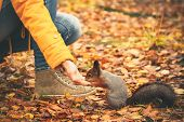 Squirrel eating nuts from woman hand