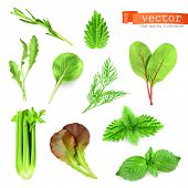 Herbs set, vector illustration