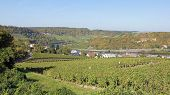 stock photo of moselle  - Moselle valley close to Machtum - JPG
