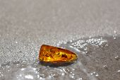 Baltic Amber Sand Water Insect Inclusion Background