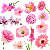 Collage of beautiful pink flowers
