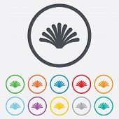 stock photo of conch  - Sea shell sign icon - JPG