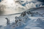stock photo of promiscuous  - Winter trees in mountains covered with fresh snow - JPG