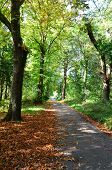 A tree lined pathway in autumnal woods
