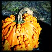 Instagram filter image of a warty pumpkin