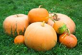 Pumpkins On The Grass