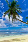 Sunshine Wallpaper Coconut