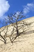 People visiting the Famous dune of Pyla, the highest sand dune in Europe, in Pyla Sur Mer, France.