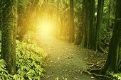 Sunlit trail in tropical forest