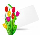 Bouquet Of Tulips On A Background Sheet