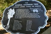 General Sherman - Sequoia