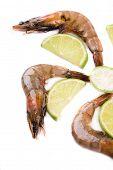 Fresh tiger shrimps