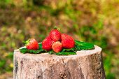 strawberries lying on green leafs