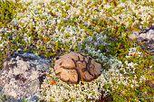 foto of magical-mushroom  - mushroom with symbols on hat in polar region - JPG