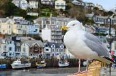 Seagull In A Typically British Seaside Town Setting