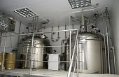 Interior Plant Medicines