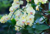 pic of orquidea  - Beautiful colorful flower in the garden Orchid or phalaenopsis - JPG