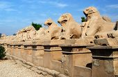 pic of ptolemaic  - Avenue of ram - JPG