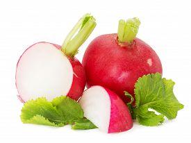 foto of radish  - tasty radishes isolated on the white background - JPG