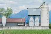 stock photo of silos  - Old cowshed with old  silos for cattle fodder - JPG