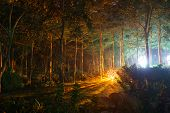 foto of mystical  - Park with mystical light at night - JPG