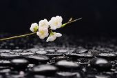 picture of fukushima  - Still life with Cherry blossom - JPG