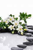 stock photo of gardenia  - Lying down gardenia with green plant on black pebbles  - JPG